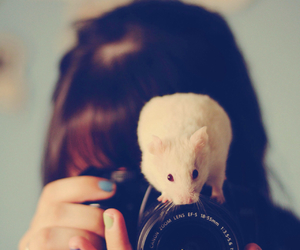 hamster, camera, and cute image