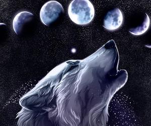 wolf, moon, and animal image