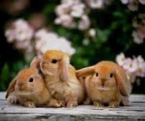 bunny, conejo, and jardin image
