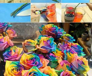 diy, rose, and colors image