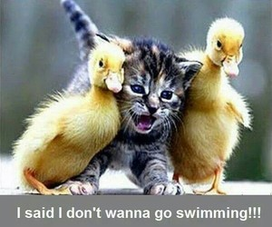 animals, cat, and ducklings image