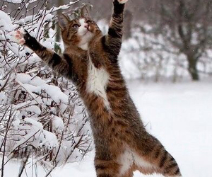 funny, cat, and snow image