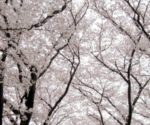 tree, flowers, and spring image