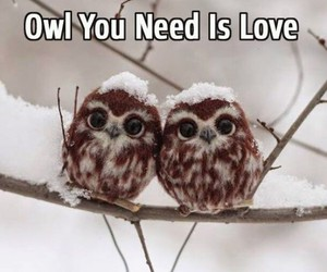 owl and love image