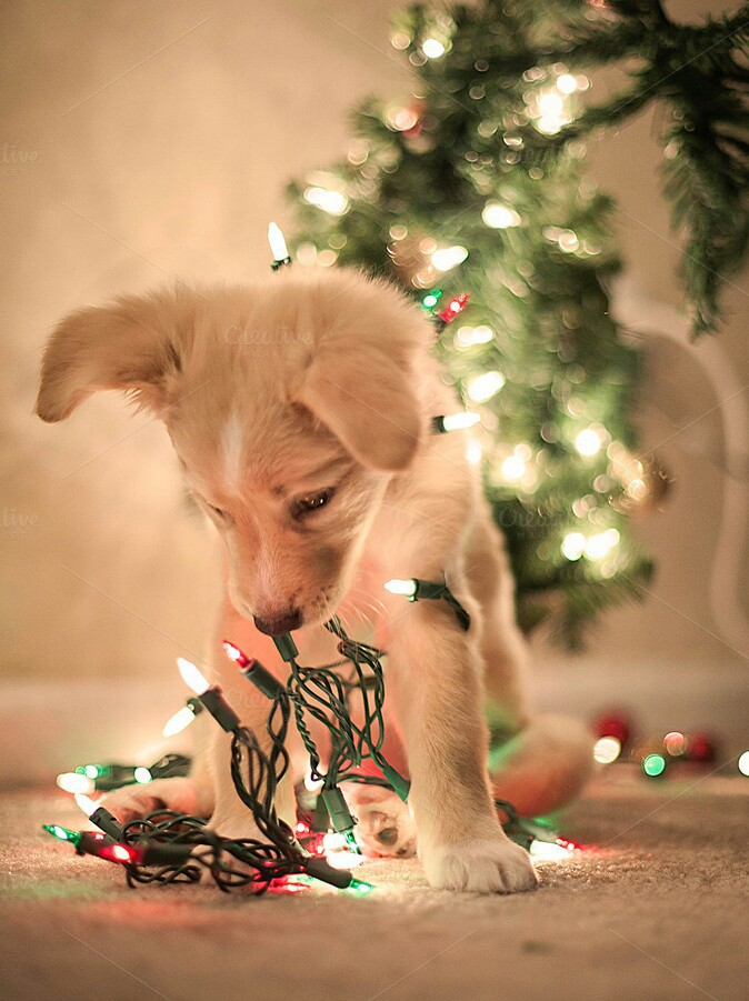 Puppy Christmas Lights Discovered By Hippy On We Heart It