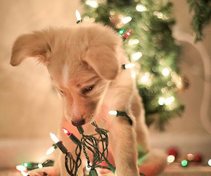 puppy christmas lights discovered by hippy on we heart it - Dog Christmas Lights
