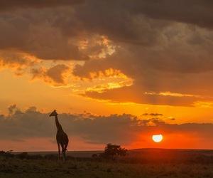 Kenya, maasai, and tribe image