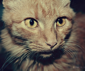cat, old, and vintage image