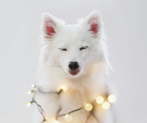 dog, light, and white image