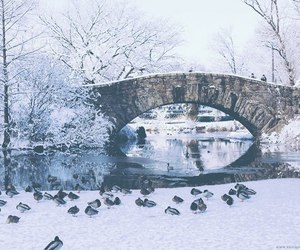 winter, snow, and Central Park image