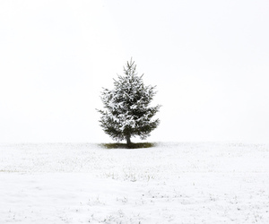 snow, tree, and white image