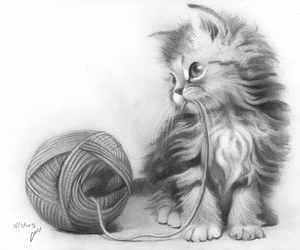 cat, disegni, and drawings image