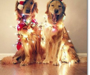 cuties, dogs, and reindeer image