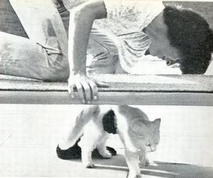 cat, george harrison, and the beatles image