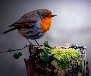 bird, birds, and color image