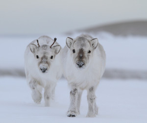 cute animals, deer, and snow image