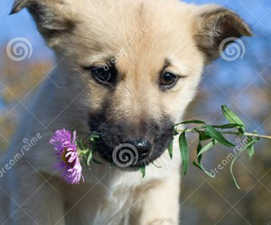 bebe and flowers image
