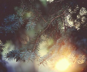 nature, light, and tree image