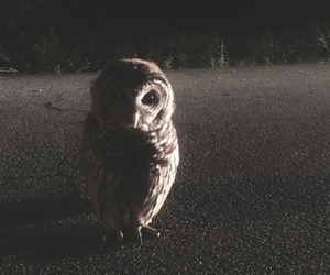 grunge, owl, and photography image