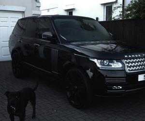 car, black, and dog image