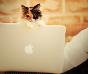 cat, apple, and cute image