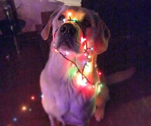 dog, lights, and cute image