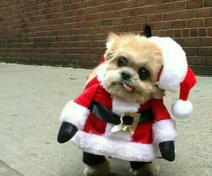dog, cute, and christmas image