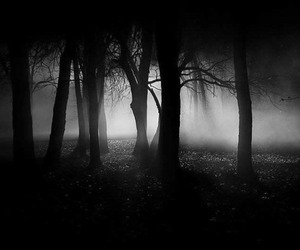dark, forest, and tree image