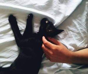 black, cat, and love image
