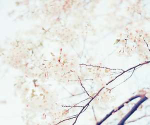tree, cherry blossom, and kawaii image