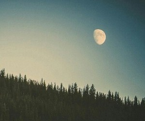 forest and moon image