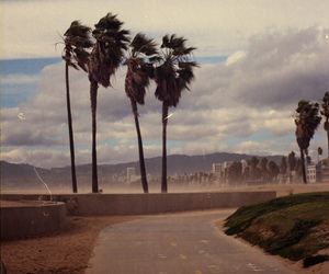 palms, beach, and photography image