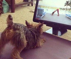 dog and yoga image