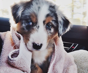 adorable, cuddly, and doggy image