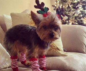 christmas, cute animals, and dogs image