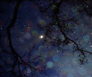 tree, stars, and blue image