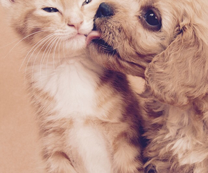dog, love, and cat image