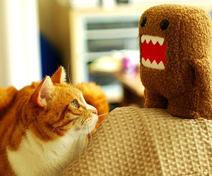 cat, kitty, and toy image