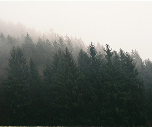 faded, foggy, and forest image