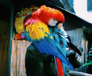 animal, beautiful, and parrot image