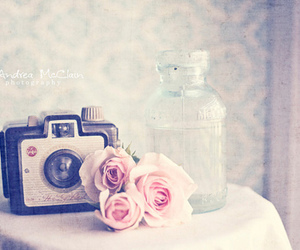 camera, rose, and photography image