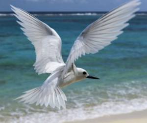 hd birds wallpapers, white birds wallpapers, and top birds wallpapers image