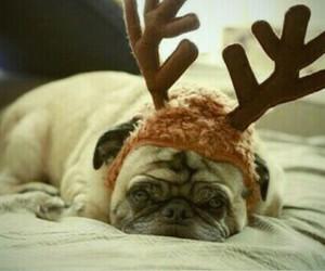 christmas, cute, and pug image