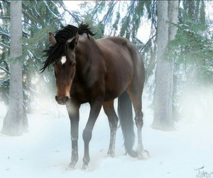beautiful, forest, and horse image
