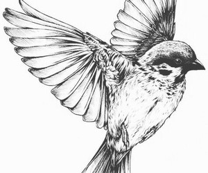 bird, drawing, and black and white image