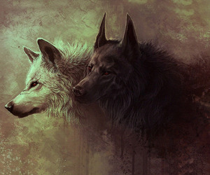 wolf, black, and white image