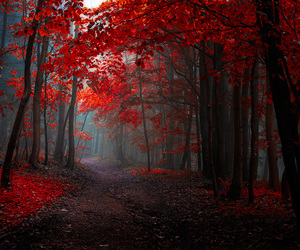forest, red, and autumn image