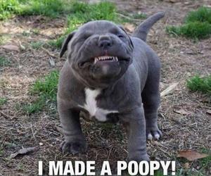 dog and Dump image