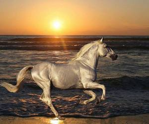 horse, sea, and sunset image
