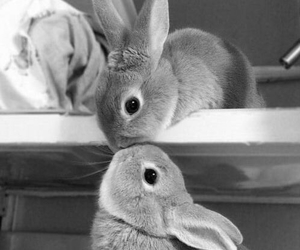 animals, lapin, and pets image
